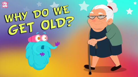 Why do we get old?