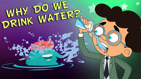 Why do we drink water?