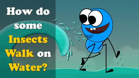 How do some insects walk on water?