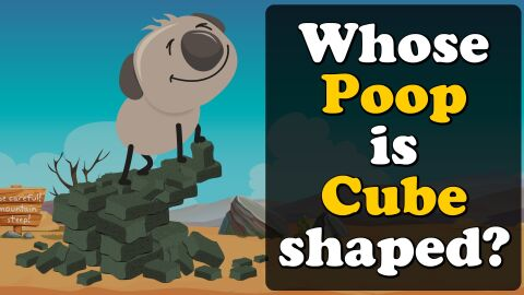 Whose poop is cube shaped?