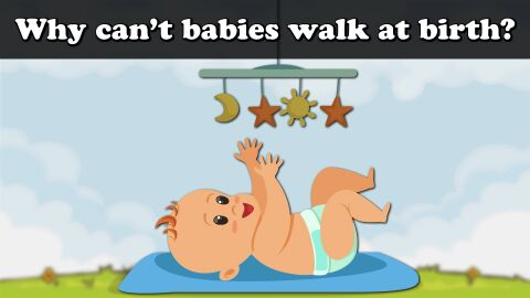Why cant babies walk at birth?
