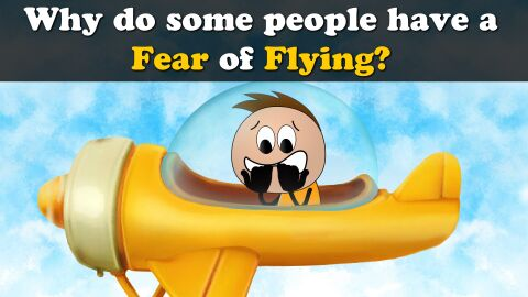 Why do some people have a fear of flying?