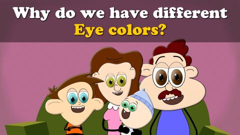 Why do we have different eye colors?