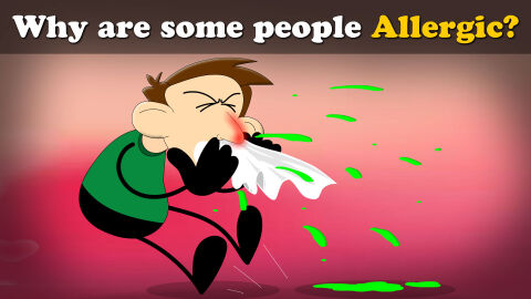 Why are some people allergic?