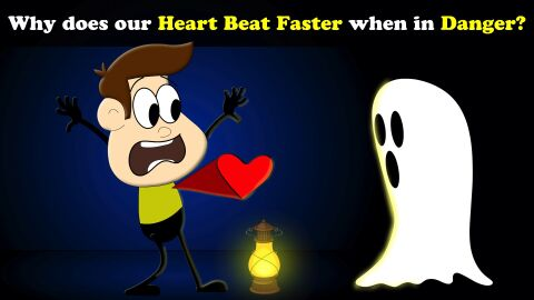 Why does our heart beat faster when in danger?