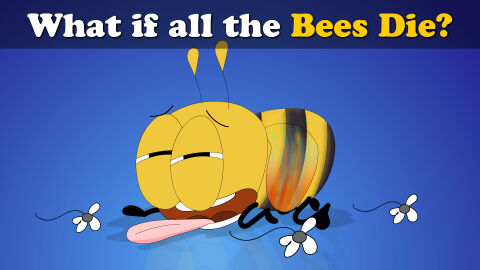 What if all the bees die?
