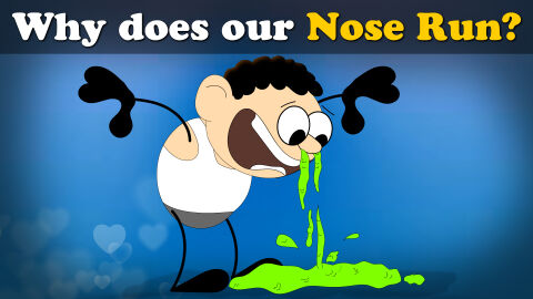 Why does our nose run?