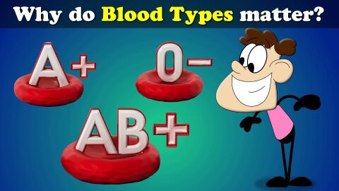 Why do blood types matter?