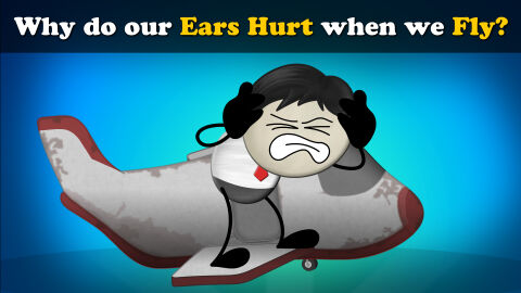 Why do our ears hurt when we fly?