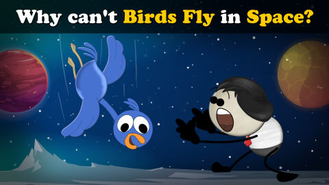 Why can't birds fly in space?