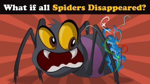 What if all spiders disappeared?