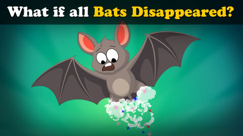 What if all the bats disappeared?