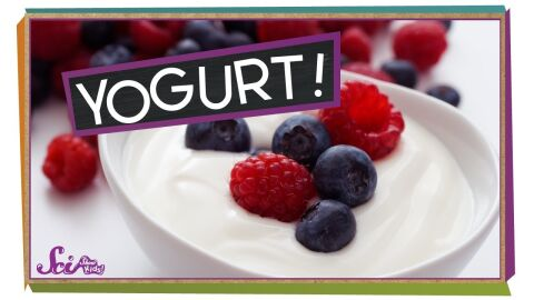 Where does yogurt come from?
