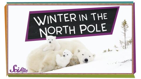 Winter at the North Pole