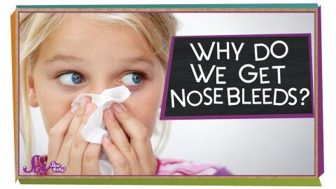 Why do we get nose bleeds?