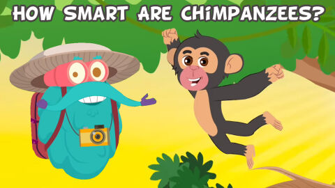 How smart are chimpanzees