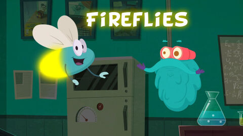 Why do fireflies glow