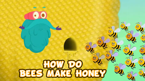 How do bees make honey