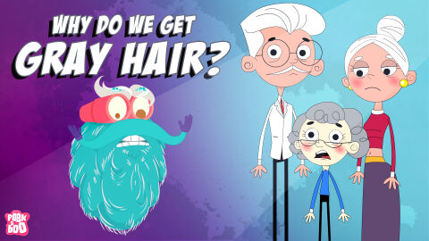 Why do we get grey hair?